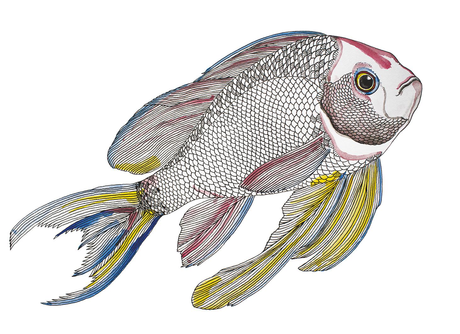 Fischweb